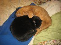 Snuggles1