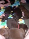 Puppies7